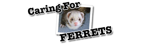 Ferret Care Articles