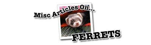 Misc Ferret Articles