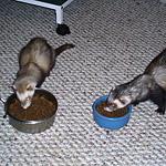 Charlie & Ozzy