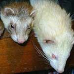 Queiko e Kiko