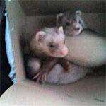 Milo & Probie