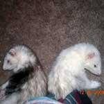 Gumby & Meeko