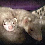 Symin & Clumzy